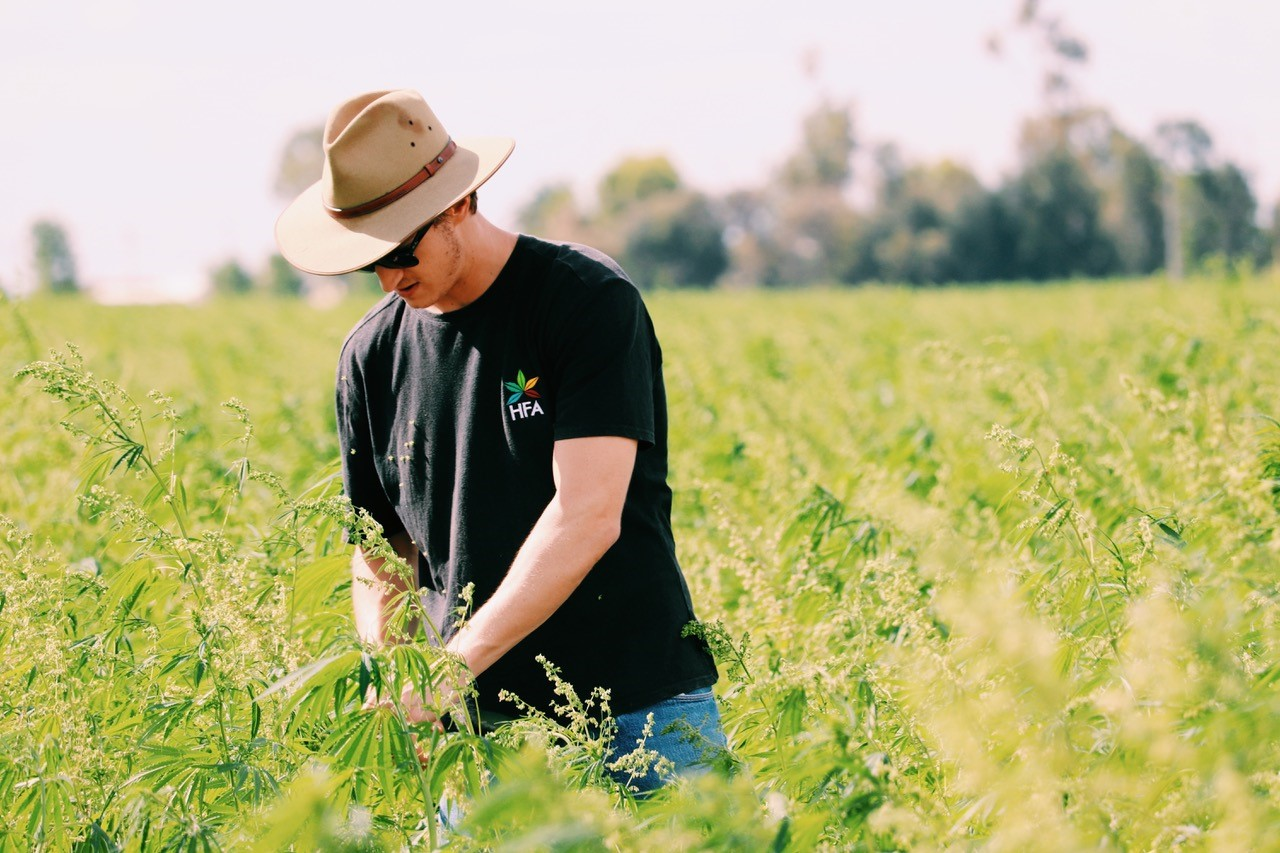 Hemp Farms Australia And Caason Support Emerging Market Caason Group